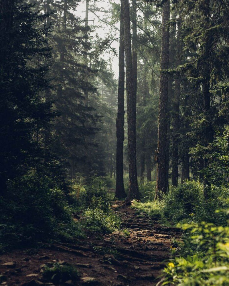 Picturesque path into the forest